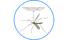 Mosquito Mating Habits and the New Atheism: