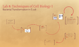 Lab 8: Techniques of Cell Biology I