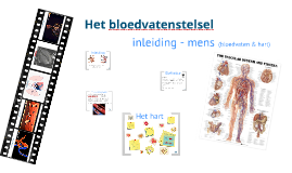 Inleiding bloedvatenstelsel
