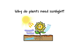 Flame Challenge: Why do plants need sunlight?