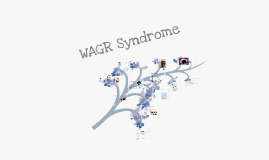 Copy of WAGR (Wilms tumour, Aniridia, Genitourinary anomalies, and mental Retardation) Syndrome