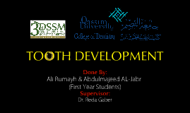 Tooth Development 2
