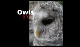 Spotted Owl Intro