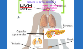 Copy of  Fisiologia del sistema endocrino II