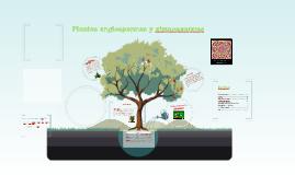 Copy of Plantas angiospermas y gimnospermas