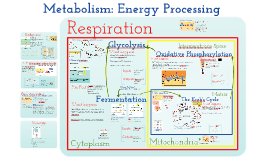 Metabolism: Glycolysis and Respiration