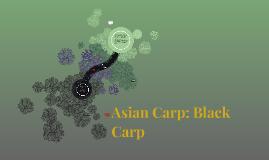 Asian Carp: Black Carp