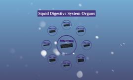 Squid Digestive System Organs