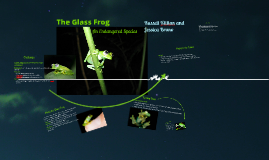 Copy of The Glass Frog