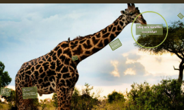 Giraffe Adaptations