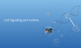 Cell Signaling and Asthma