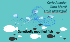 Genetically modified fish