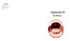 anatomía de la boca