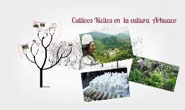 Cultivos ilicitos en la cultura Arhuaco