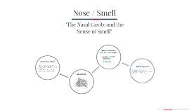 """The Nasal Cavity and the Sense of Smell"""