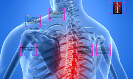 spinal cord and its function