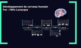 Développement du cerveau humain