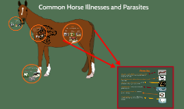 Horse Illnesses and Parasites