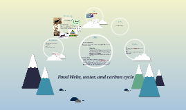 Food Webs, water, and carbon cycle