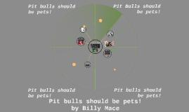 Pitbulls should be pets!