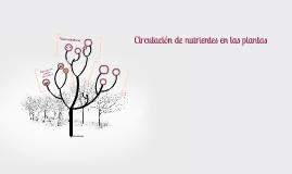 Circulación de nutrientes en las plantas