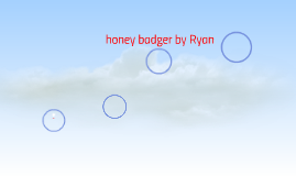 honey badger by Ryan