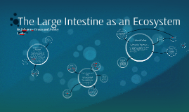 The Large Intestine as an Ecosystem