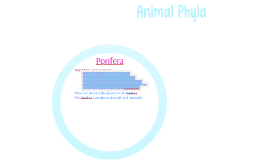 Animal Phyla