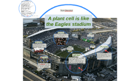 A plant cell is like the Eagles stadium