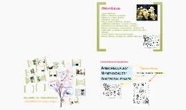 Copy of filogenia de plantas