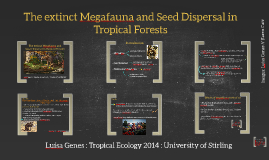 The extinct Megafauna and Seed Dispersal in Tropical Forests