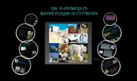 Copy of ANIMALES EN VÍA DE EXTINCIÓN