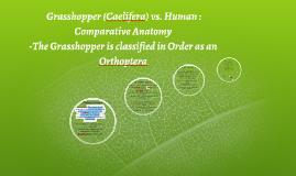Copy of Grasshopper vs. Human : Comparative Anatomy