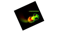 Copy of LUMINOL