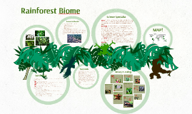 Rainforest Biome!