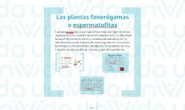 Las plantas fanerógamas o espermatofitas