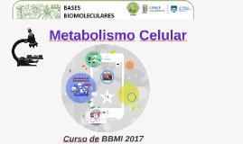 Copy of Metabolismo