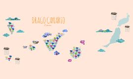 Drago Canario