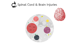 Spinal Cord & Brain Injuries