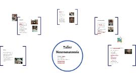 Taller Neuroanatomia