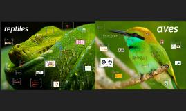 Copy of Desarrollo Embrionario en Aves y Reptiles