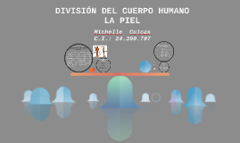DIVISIÓN DEL CUERPO HUMANO - LA PIEL