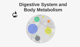 Digestive System and Body Metabolism