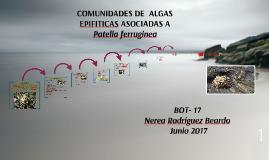 COMUNIDADES DE  ALGAS EPIFITICAS ASOCIADAS A              Pa