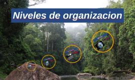 Niveles de organizacion