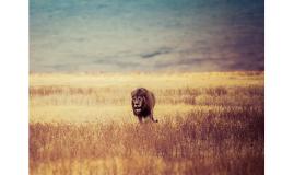 Lion Presentation