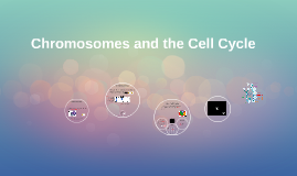 Chromosomes and the Cell Cycle