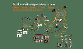 Copy of Sacrificio de animales