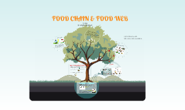 Copy of FOOD CHAIN & FOODWEB