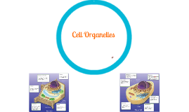 Cell Organelles (NWMS)